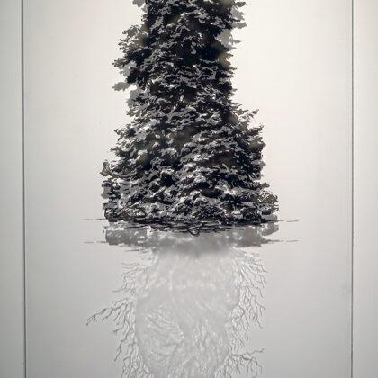 Sapin d'espagne - Abies pinsapo Boiss, Technique mixte sur plexieglas - 55 x 34 cm 2021