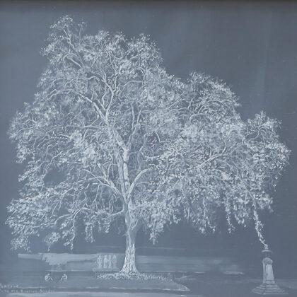 Ingrid Kaufmann. Platane comun Platanus acerifolia Parc des Bastions Serie blanc sur blanc