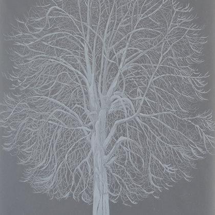 Marronnier, 2017, technique mixte sur papier calque, 21 x 30 cm