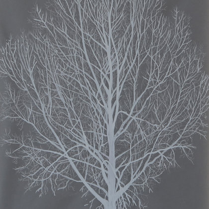 Peuplier noir, 2017, technique mixte sur papier calque, 21 x 30 cm